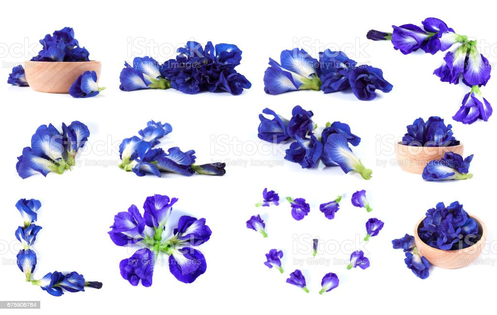Blue pea butterfly pea close up background stock photo