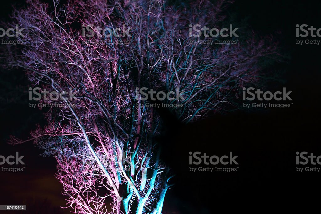 blue pink branches stock photo