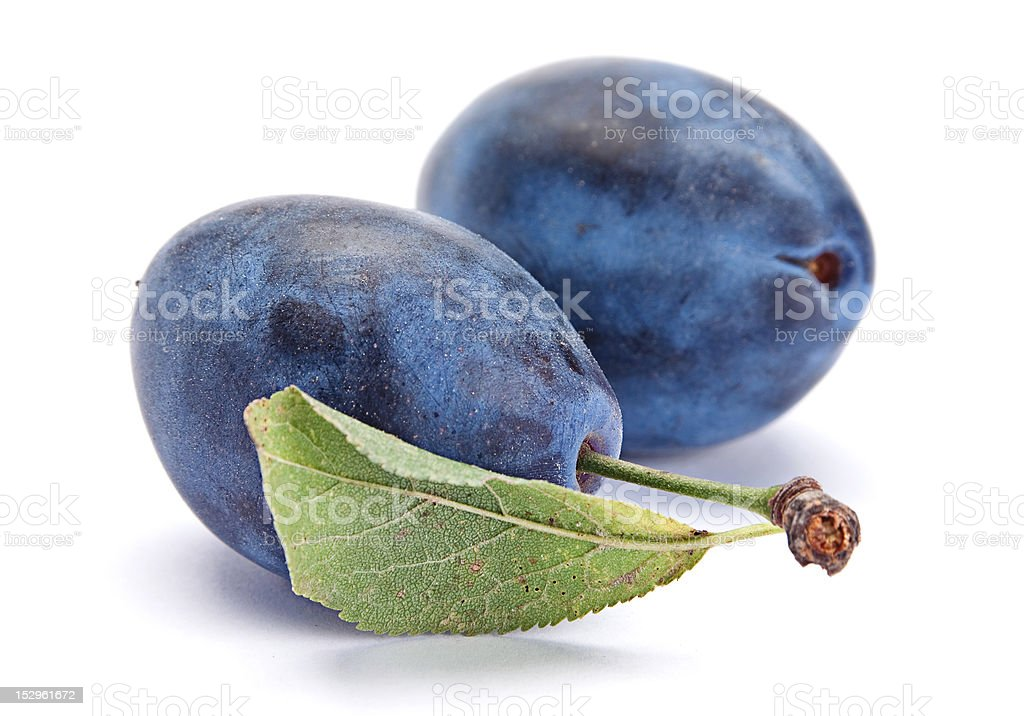 Blue plum with leaf royalty-free stock photo