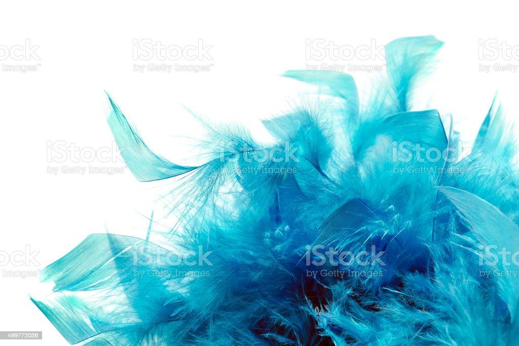 Blue plumage stock photo