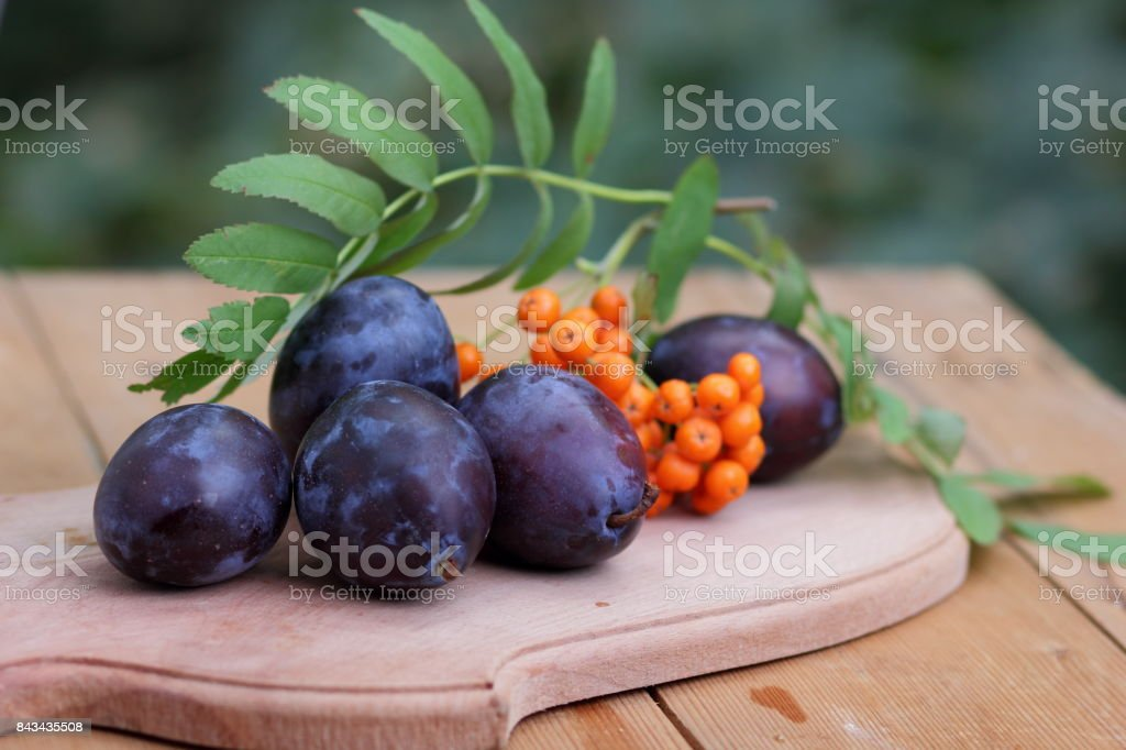 Blue plums and mountain ash on a wooden background for the designer stock photo