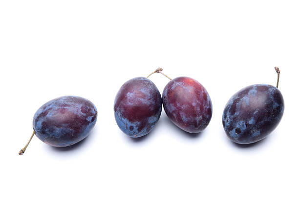 Blue plums stock photo