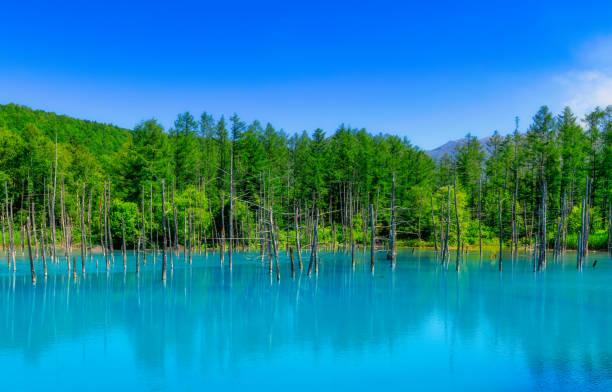水の反射と美しい青い曇り空、北海道美瑛の青い池 (aoiike) - 北海道 ストックフォトと画像