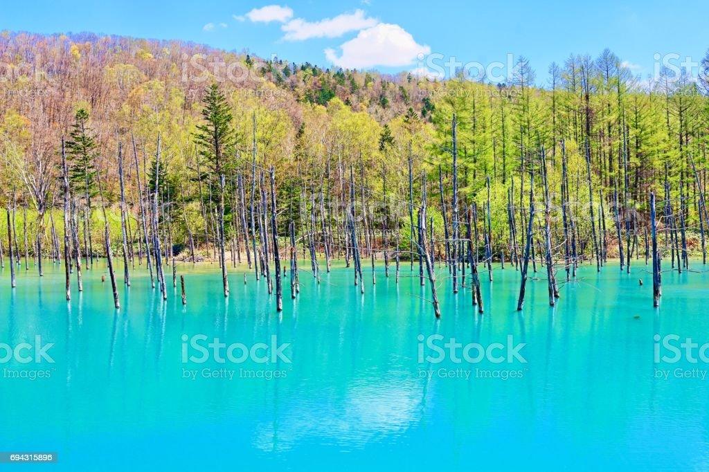 Blue pond.Biei tourist destination stock photo