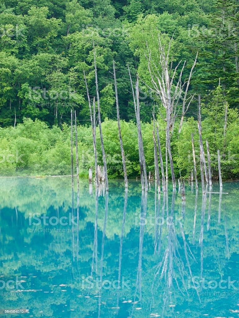 Blue Pond,Biei/Hokkaido,Japan stock photo