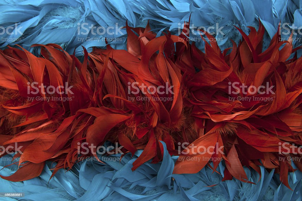 Blue - red boa feathers of birds stock photo