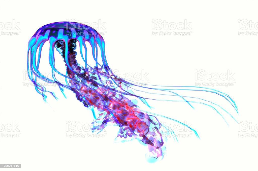 Blue Red Jellyfish stock photo