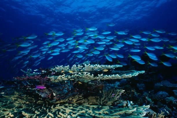 Blue Reef-Parade – Foto