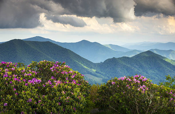 Blue Ridge Appalachian Mountain Peaks and Spring Rhododendron Flowers Blooming Blue Ridge Appalachian Mountain Peaks and Spring Rhododendron Flowers Blooming along the Appalachian Trail in Western NC blue ridge mountains stock pictures, royalty-free photos & images