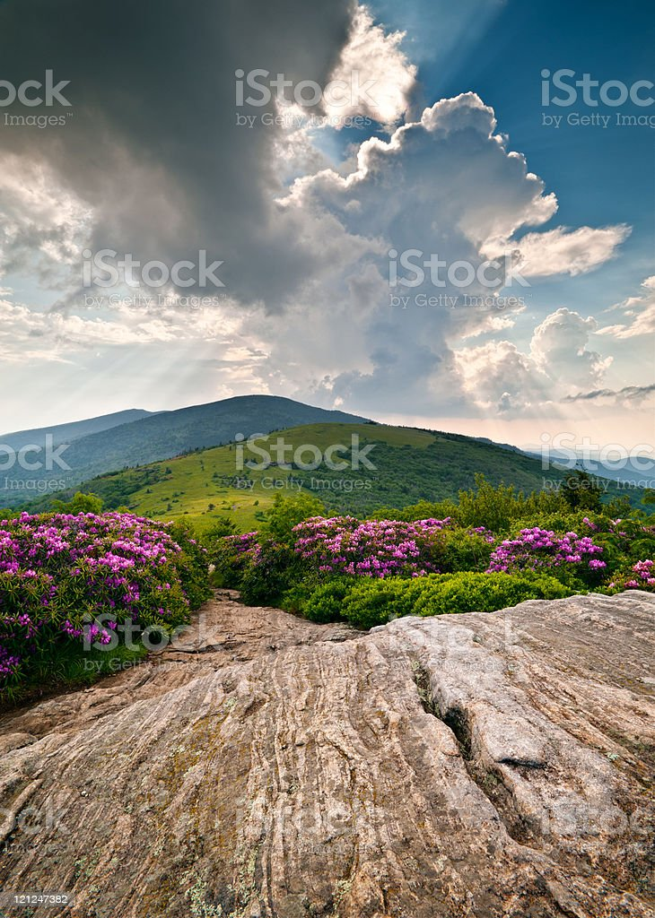 Blue Ridge Mountains Blooming Alpine Meadow Landscape at Roan Highlands stock photo