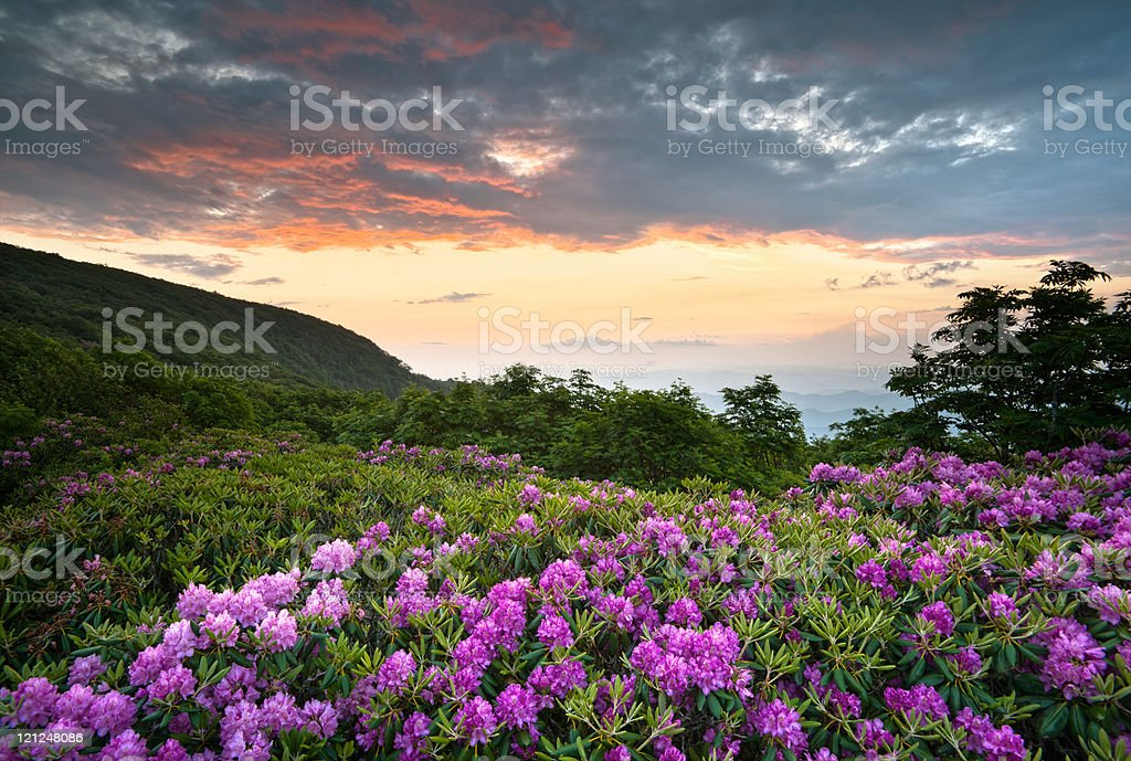 Blue Ridge Parkway Mountains Sunset over Spring Rhododendron Flowers Blooms stock photo