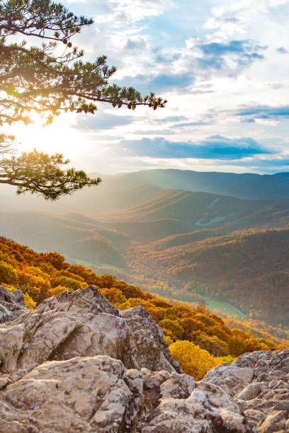 Blue Ridge Sunset A lone tree standing at the top of a mountain peak, a valley down in the distance. blue ridge mountains stock pictures, royalty-free photos & images