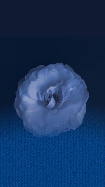 Blue rose flower. Wallpaper for mobile. stock photo