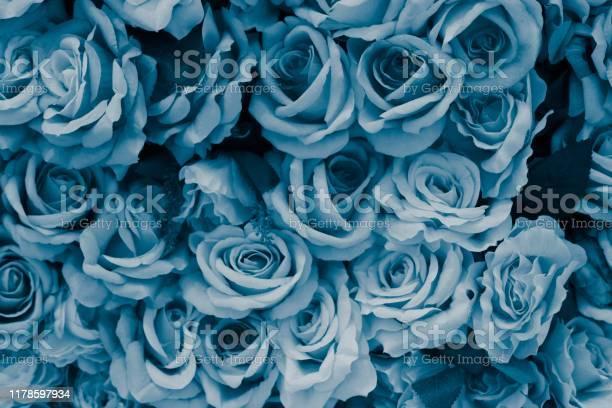 Blue rose image picture id1178597934?b=1&k=6&m=1178597934&s=612x612&h=oznvdtl3g0qgd393iqzgfb9kosnavrjyw816qti6dgi=
