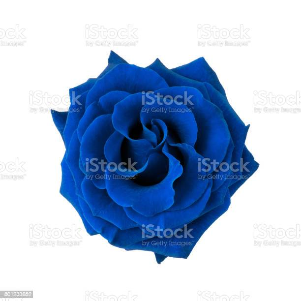 Blue rose isolated on white picture id801233652?b=1&k=6&m=801233652&s=612x612&h=fzhgrmr0weujrsngh1sxxuie5vxme6pct52wb1gcqvs=