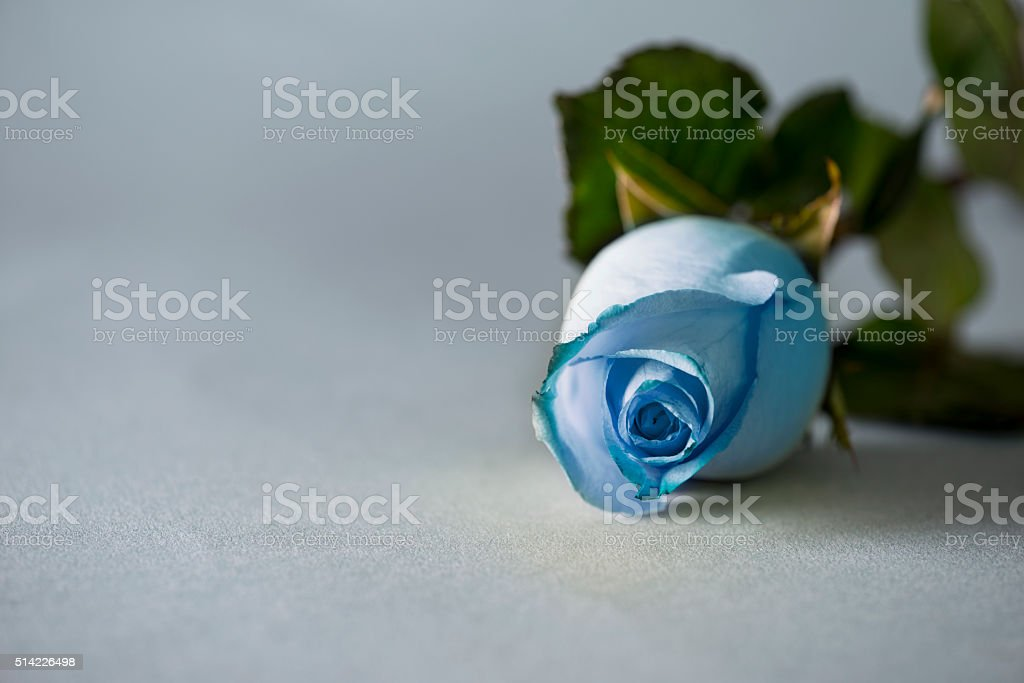Blue Rose On Paper Background stock photo