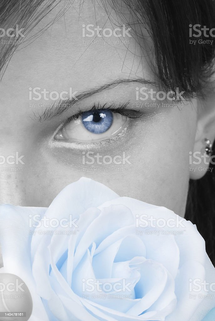 blue rose royalty-free stock photo