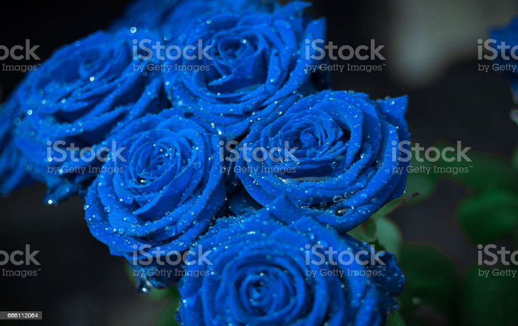 Blue roses bouquet stock photo