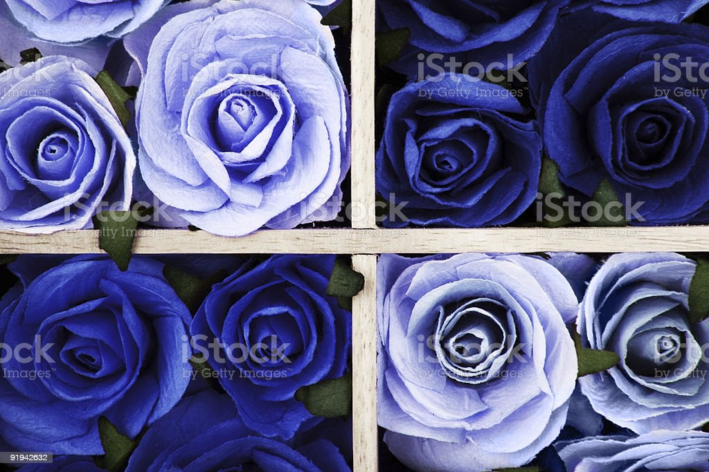 Blue Roses royalty-free stock photo