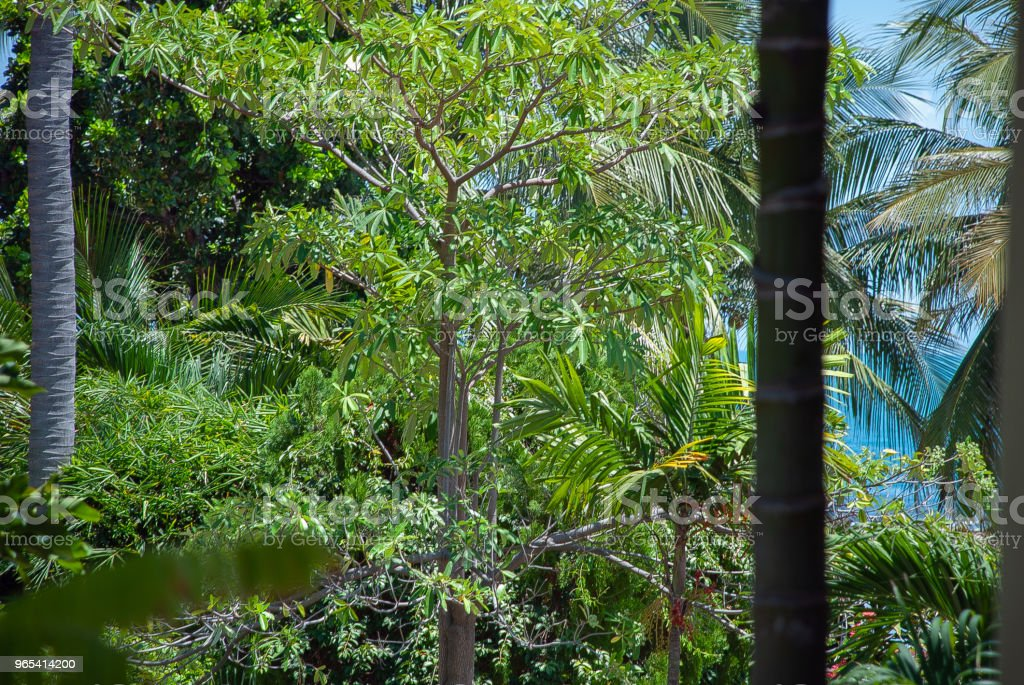 Blue sea and tropical nature zbiór zdjęć royalty-free