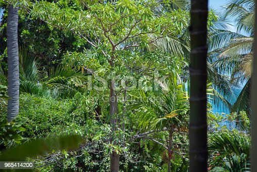 Blue Sea And Tropical Nature Stock Photo & More Pictures of Branch - Plant Part