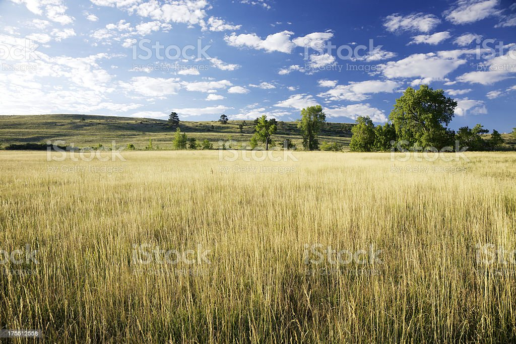 Blue Skies and Golden Field stock photo