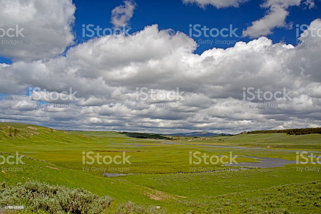 Blue skies and green grass of Yellowstone National Park. stock photo