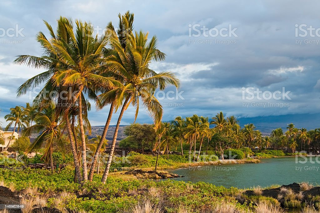 Blue skies and palm trees in Hawaii stock photo
