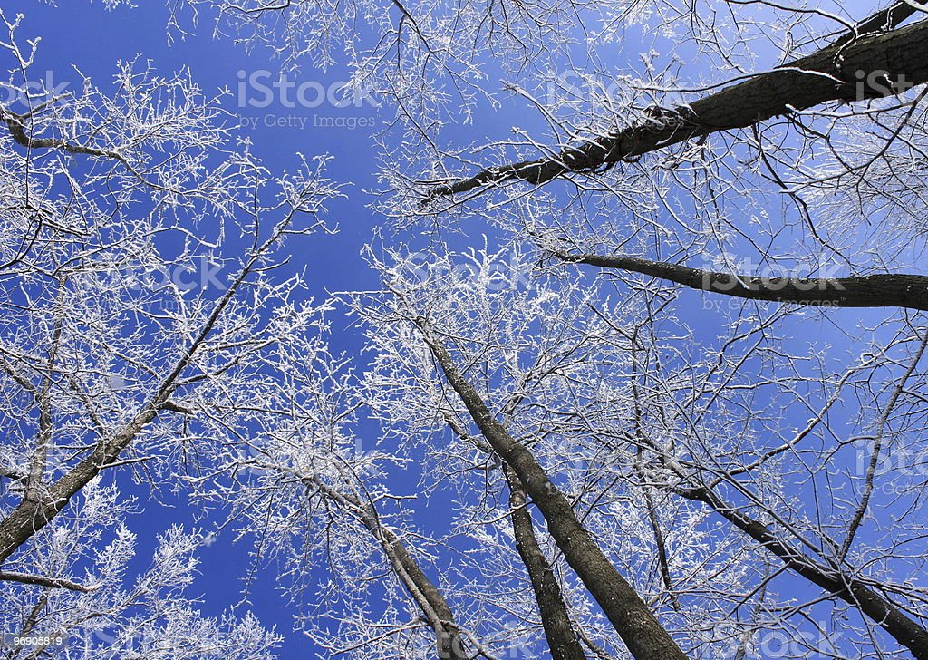 Blue Skies in February royalty-free stock photo