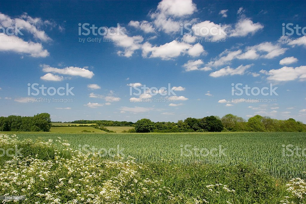 Blue skies over Suffolk field royalty-free stock photo