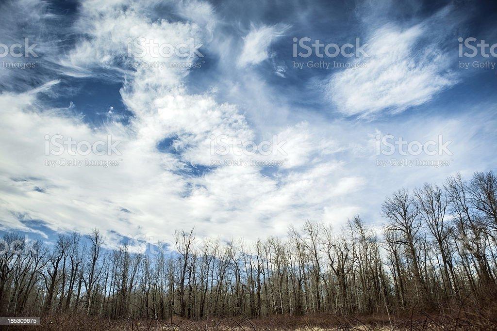 Blue Sky & Cirrus Clouds Over Tree Nature Area stock photo
