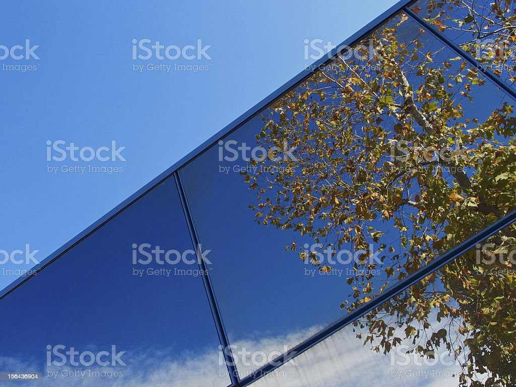 Blue sky and autumn sycamore royalty-free stock photo