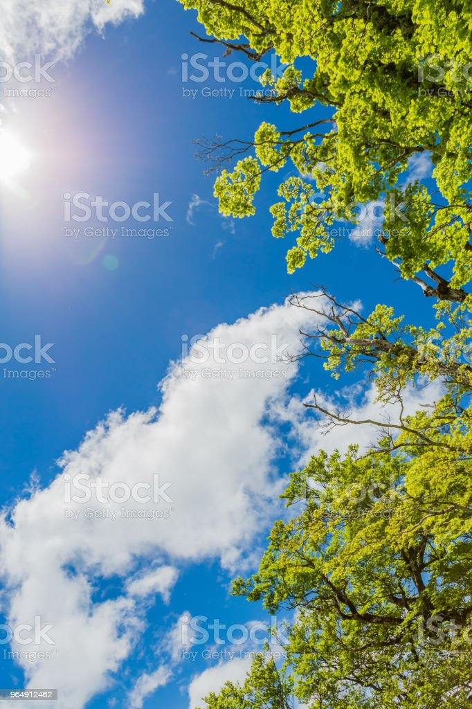 Blue sky and clouds and fresh green royalty-free stock photo