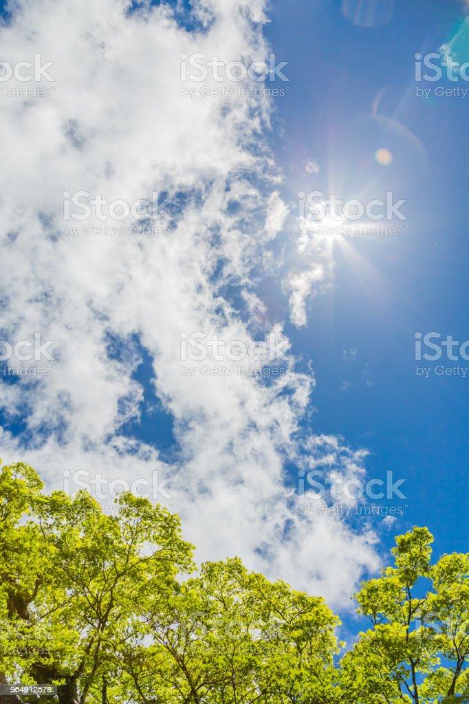 藍天白雲清新綠色 - 免版稅乾淨圖庫照片