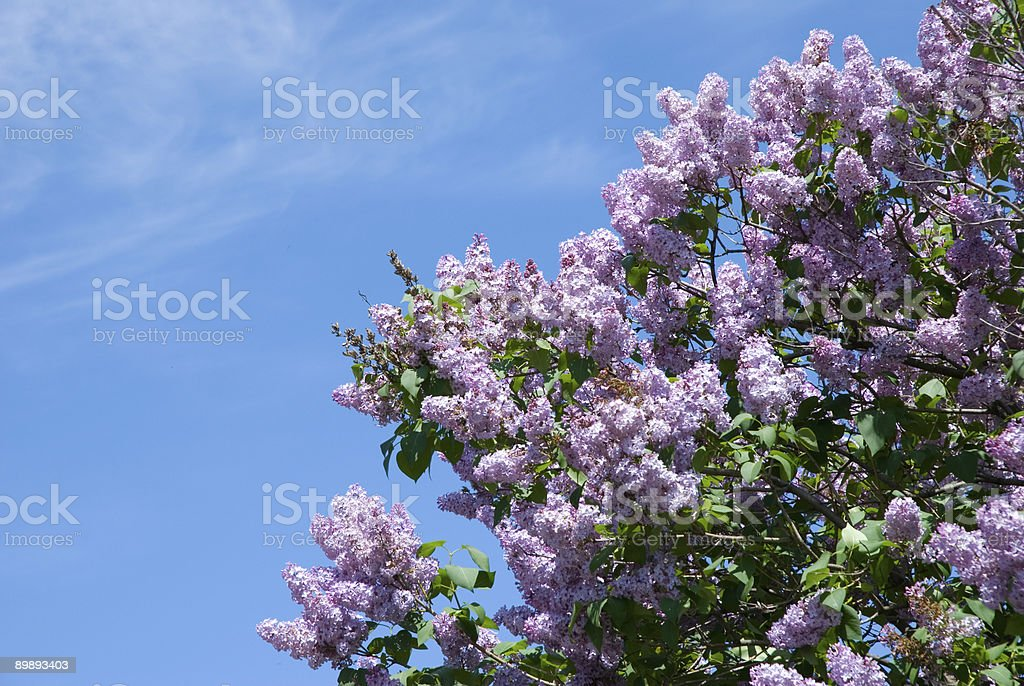 blue sky and flower royalty-free stock photo