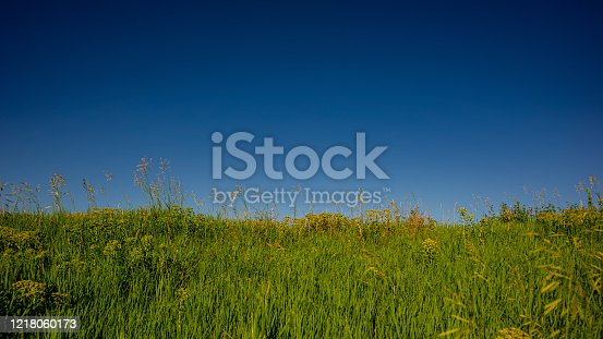 643781968 istock photo Blue sky and green grass in the evening in the field. 1218060173