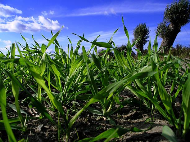 Blauer Himmel und grünem Gras – Foto