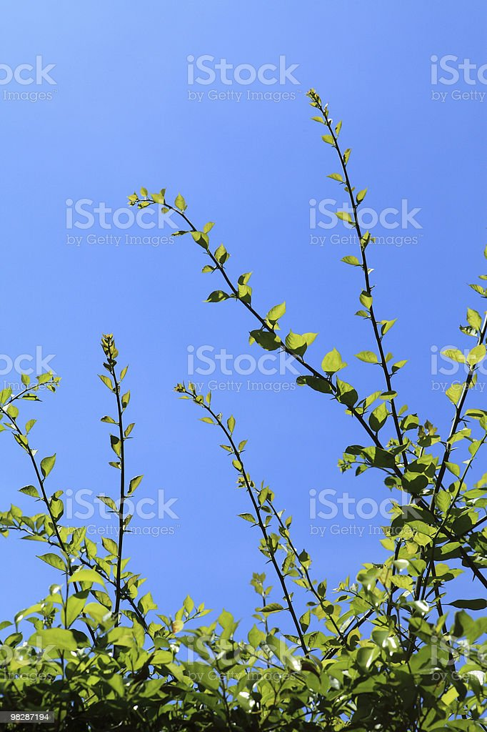 Blue sky and green leaves royalty-free stock photo