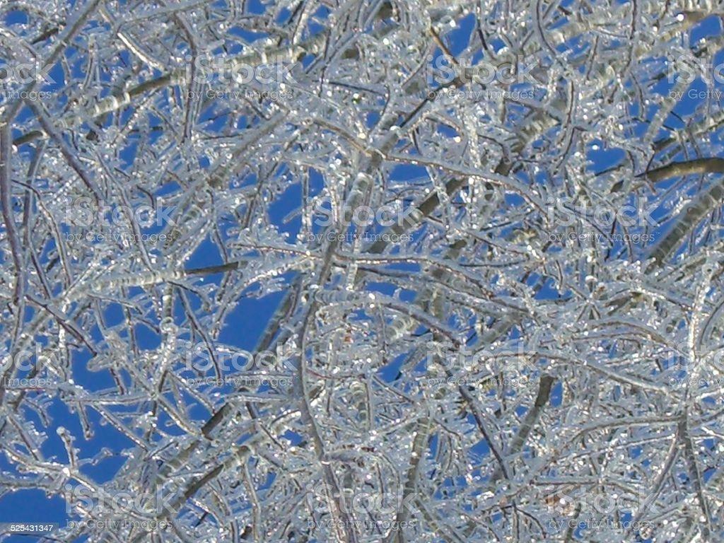 Blue Sky and Iced Limbs stock photo