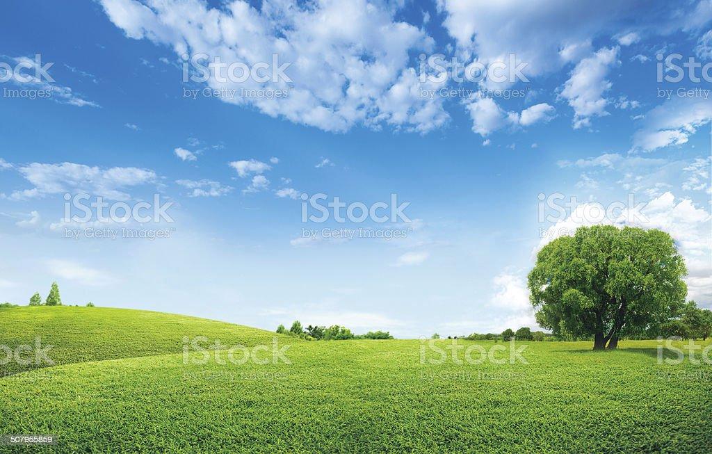 Blauer Himmel und Wiese – Foto