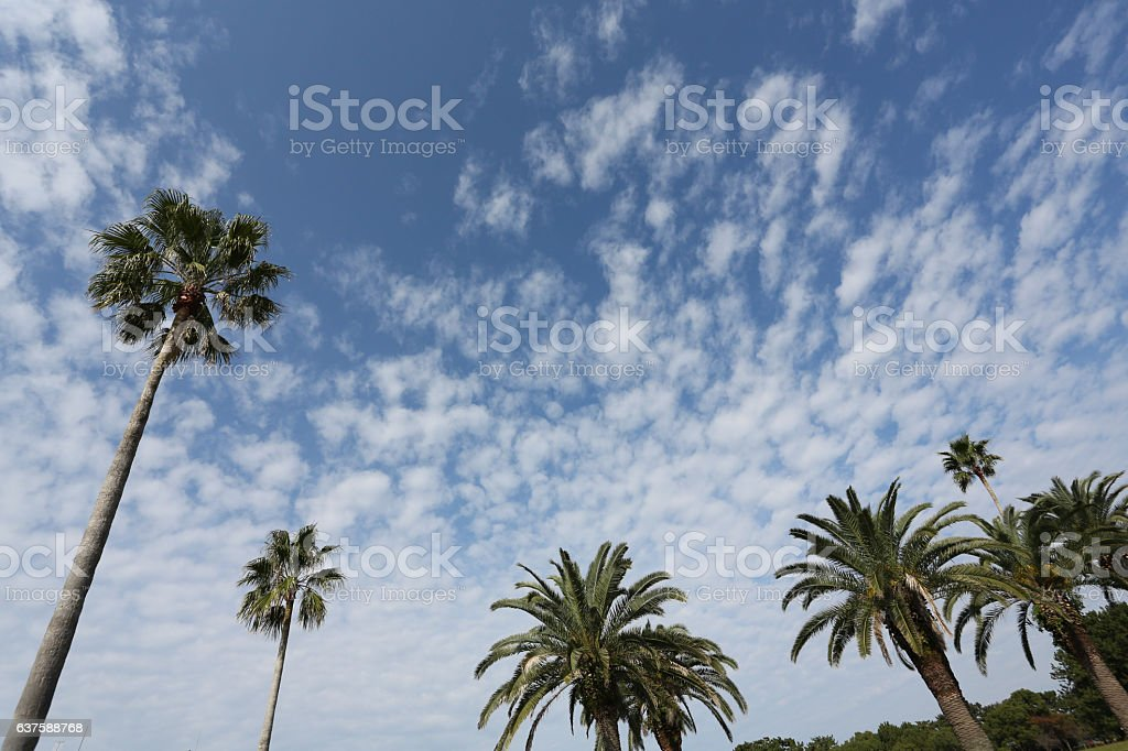 Blue sky and palm tree stock photo