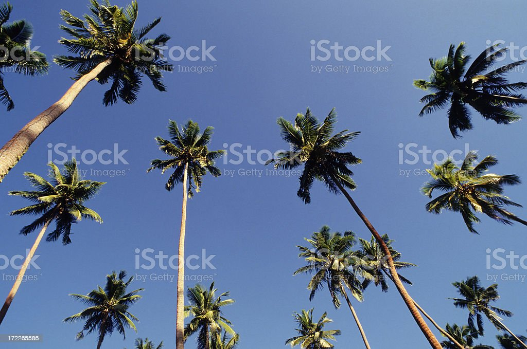 Blue Sky and Palm Trees royalty-free stock photo