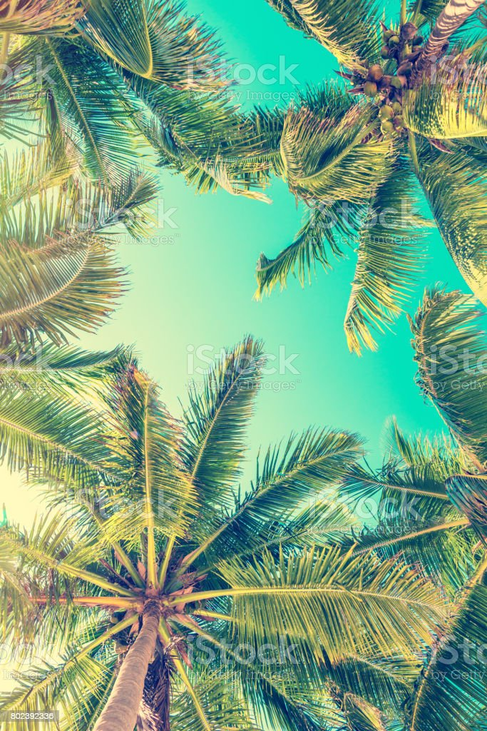 Blue sky and palm trees view from below stock photo