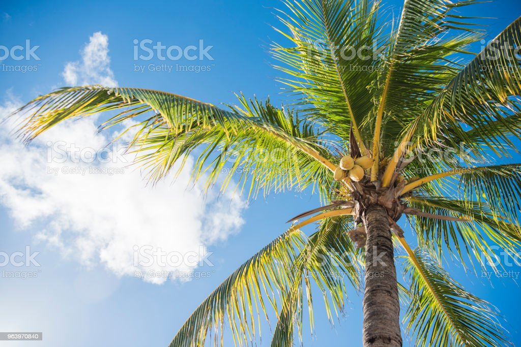 Blue sky and palm trees view from below - Royalty-free Backgrounds Stock Photo