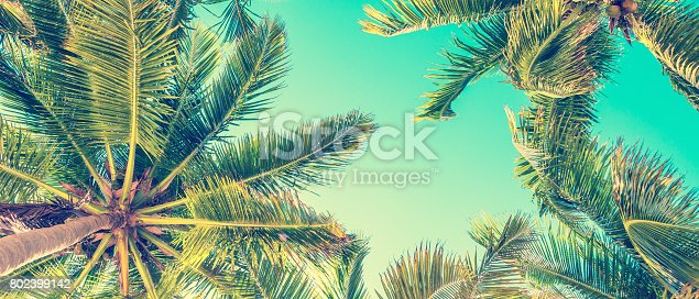 istock Blue sky and palm trees view from below, vintage style, summer panoramic background 802399142