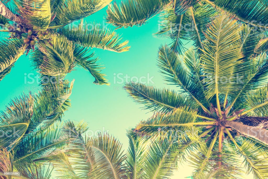 Blue sky and palm trees view from below, vintage style, summer background stock photo