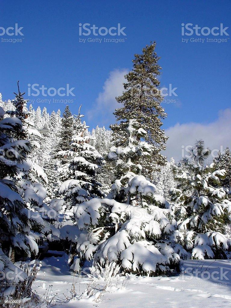 青い空と雪 - カラー画像のロイヤリティフリーストックフォト