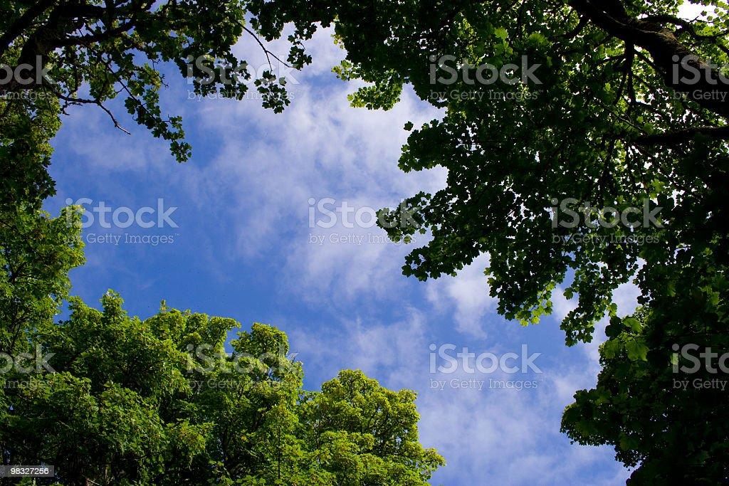 Blue sky and tree tops royalty-free stock photo