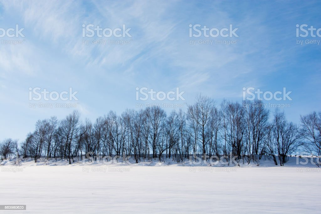 Blue sky and winter grove stock photo