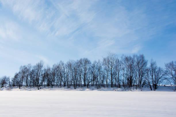Bleu ciel et bosquet d'hiver - Photo